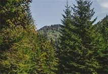 Cascada Misina